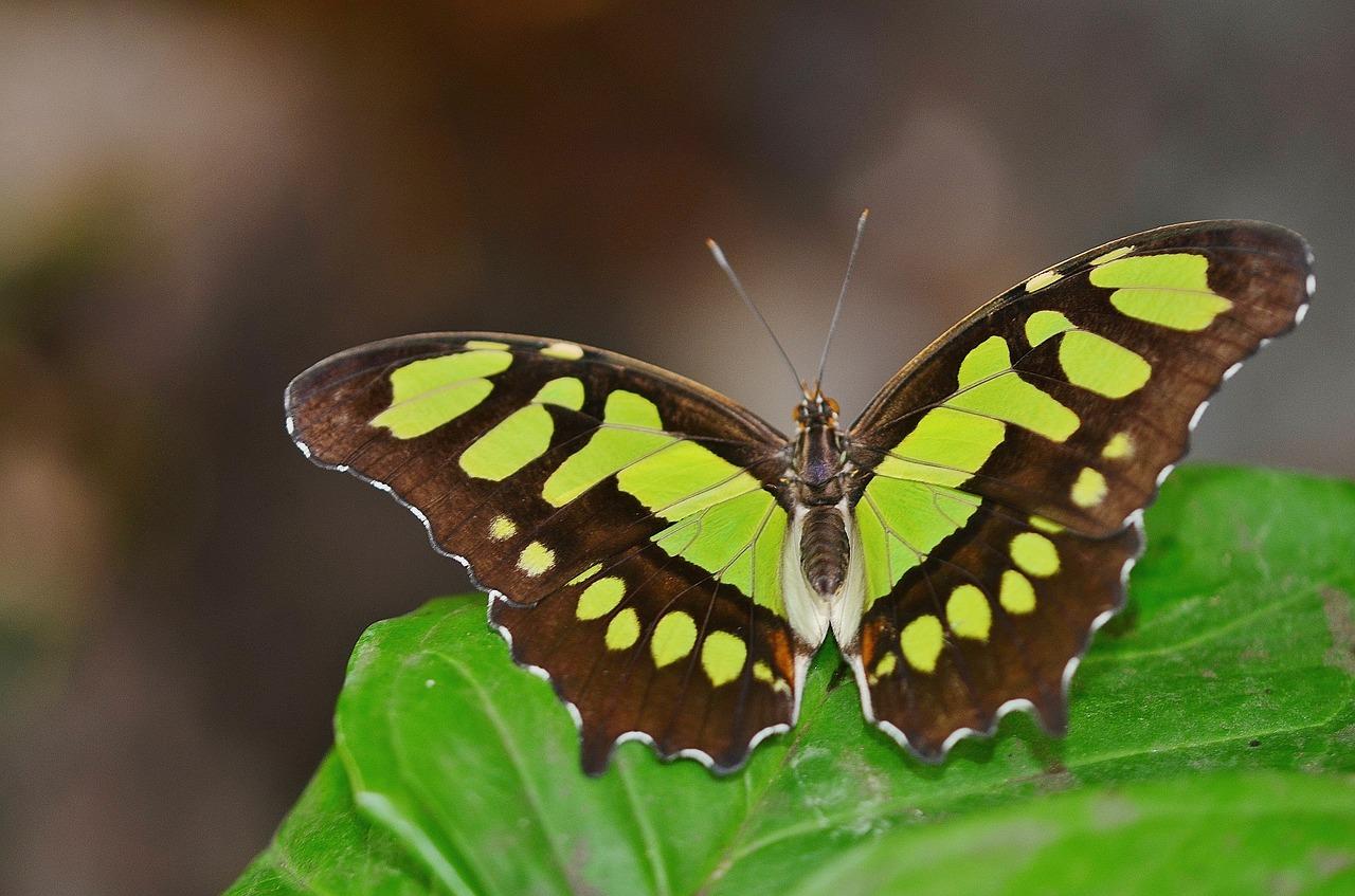 Vrijheid als een vlinder